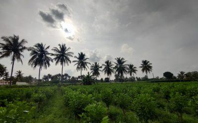 Mulberry Farm | ReshaMandi
